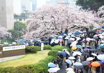 After the ceremony, many freshmen and their parents moved from the Nippon Budokan, colored by cherry trees in full bloom, to the Ichigaya Campus.
