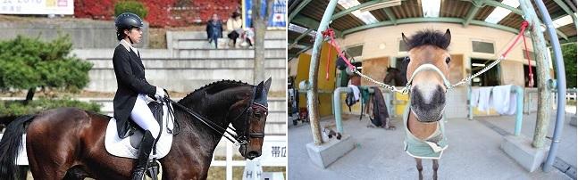 1922年創立の体育会馬術部は、多摩キャンパスの大自然の中、毎日馬たちと共に活動しています。 文武両道をモットーに、2001年の全日本学生賞典障害飛越競技での優勝等、創部以来全国大会に おいて上位の成績を残しています。競技だけではなく、ミニチュアホースのモカと共に地域のお祭り に参加し、子どもたちへ動物との触れ合いの場を提供する等、地域貢献活動にも取り組んでいます。 日々「人馬一体」を目指して練習に励み、部員一丸となって努力を重ねてまいります。